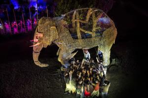Viagem Elefante | Fotografia de CarlosTeles
